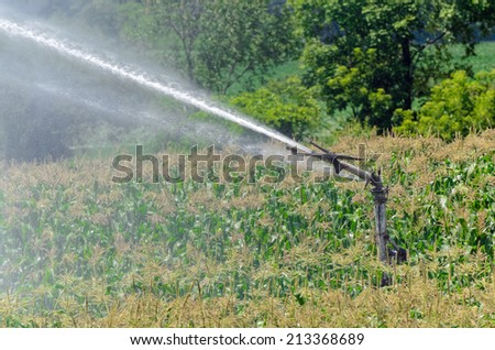 Watering Corn - stock photo