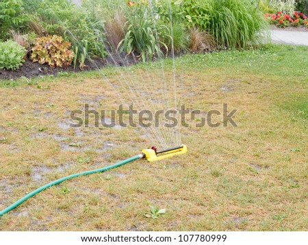 Watering dry lawn with herbaceous border in background - stock photo