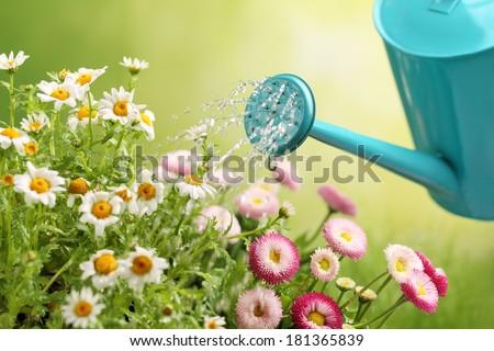 watering flowers in garden centre - stock photo