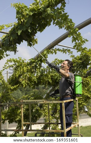 watering grapes - stock photo