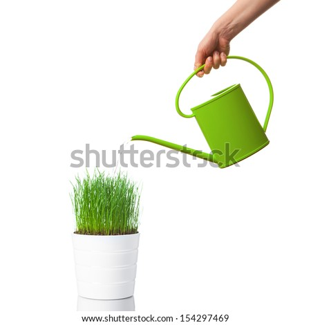 watering green grass with a watering can, isolated on white - stock photo