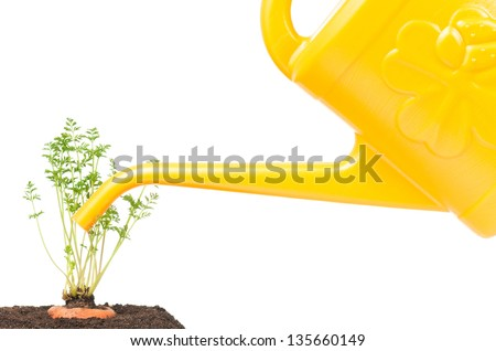 Watering of young carrots over white background concept - stock photo