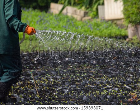 Watering plants - stock photo