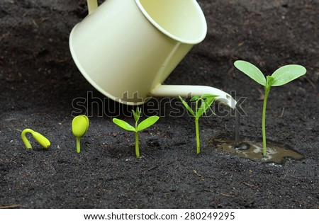 Watering plants growing in sequence of seed germination on soil, evolution concept - stock photo