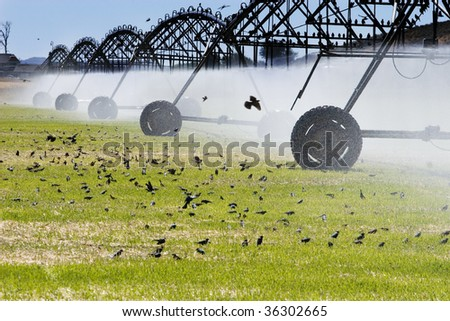 watering the field - stock photo
