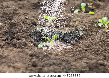 Watering the garden at dusk. Seedlings are watered from a watering can. - stock photo