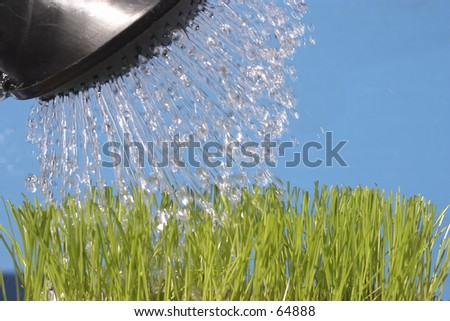 watering the green grass - stock photo