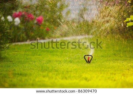 watering the lawn in garden with sprinkler system
