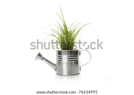 Watering with a green plant isolated on white background