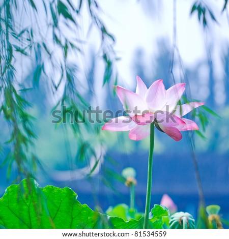 waterlily - stock photo