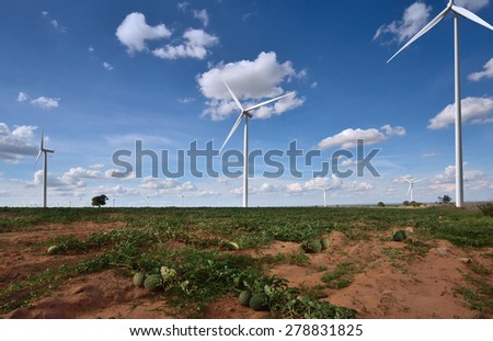 Watermelon farm with wind turbines. - stock photo