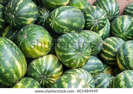 Watermelon is an annual herbaceous plant, a species of Citrullus family Cucurbitaceae
