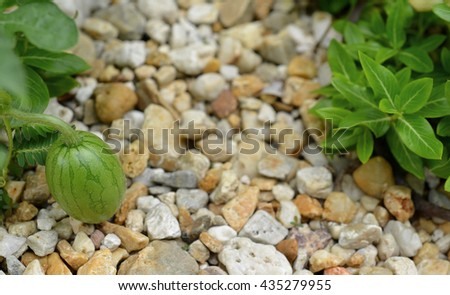 Watermelon on the - stock photo