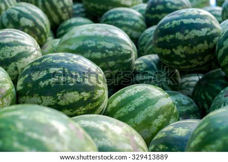 Watermelons on the market. Healthy nutrition concept