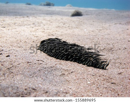 Wave of juvenile catfish over sand - stock photo