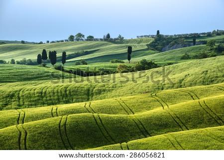 Waved green fields in sunny Tuscany. - stock photo