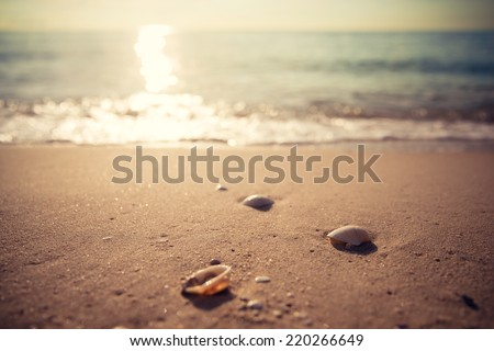 Waves approaching sea shells lying on sand during sunrise. Retro filter. - stock photo