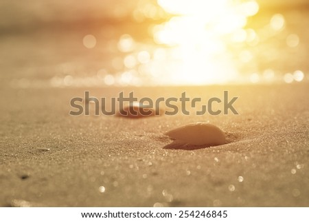Waves approaching sea shells lying on sand during sunrise. Vintage filter - stock photo