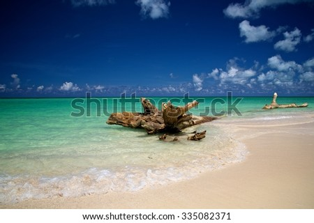 Waves crashing against driftwood on a beach in Mexico. - stock photo