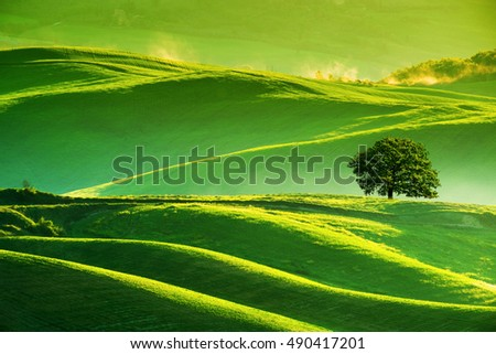 Waves hills, lonely tree, minimalistic landscape with green fields in the Tuscany. Italy