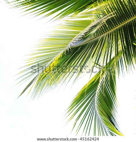 Waving palm tree leaves - stock photo