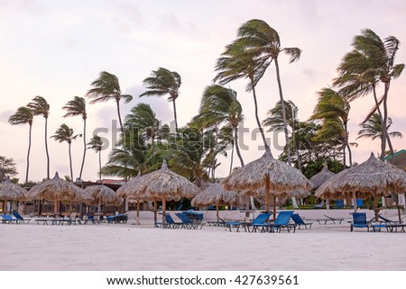 Waving palm trees and beach umbrellas at sunset on the beach on Aruba island