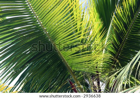 Waving Palms
