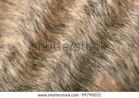 Wavy Fur Closeup - stock photo