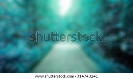 Way green blue to haven,The way wood in the forest spring perspective with blue sun light ,winter symbol nature trees blur background - stock photo