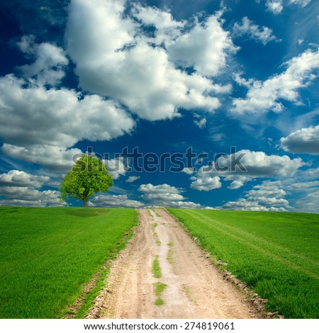 way in green meadow under dramatic sky - stock photo