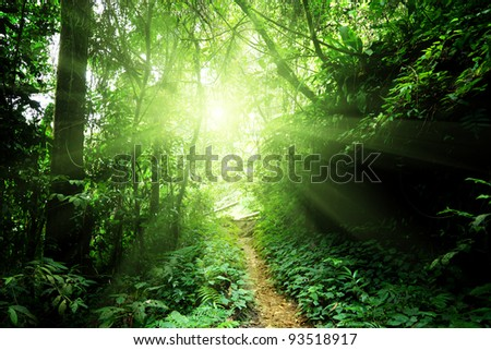 way in jungle of Malaysia - stock photo