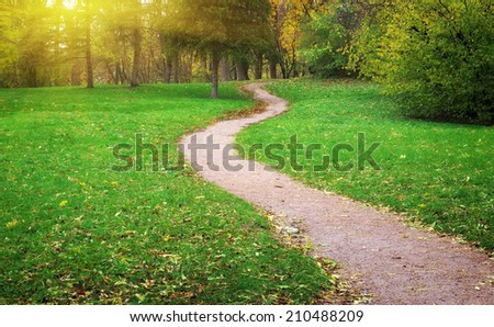 Way in yard. Nature composition. - stock photo