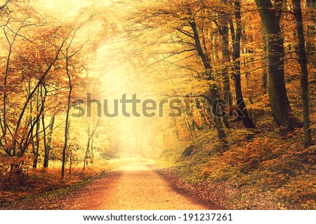 Way into forest - stock photo