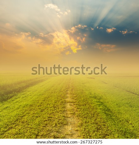 Way of Grass Grass fields and Sunset for background - stock photo