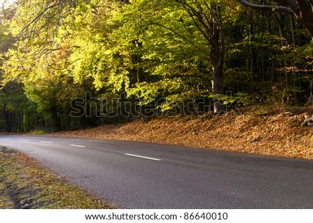 Way of the beautiful fall foliage in a forest.