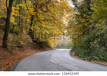way through the autumn forest