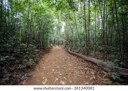 Way through the jungle, Brazil - stock photo