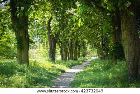 Way through the tree-lined Avenue