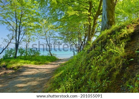 Way to sea by green deciduous forest. Summer green nature. - stock photo