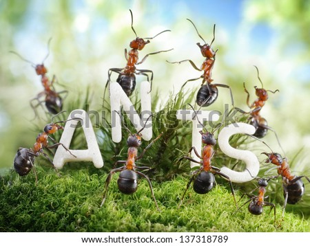 We Are The Ants. ant tales. - stock photo