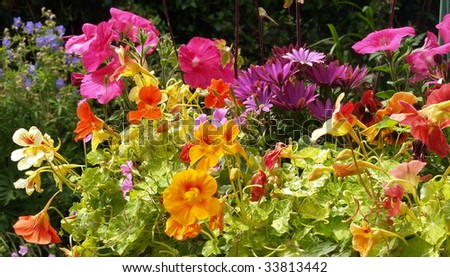We are the flowers of one garden. Multiple varieties of pansies grow in a Victoria flower box - stock photo