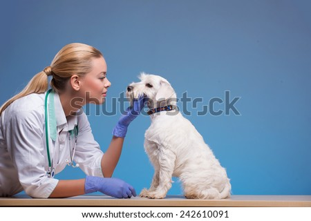 We take the best care of your pets. Portrait of a young beautiful vet patting a lovely dog isolated on blue background - stock photo
