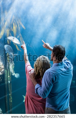Wear view of couple pointing a fish in the tank at the aquarium - stock photo