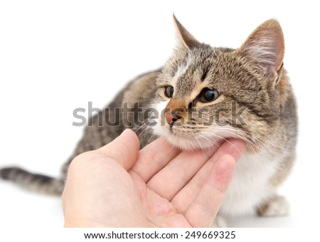 weasel cat on a white background - stock photo