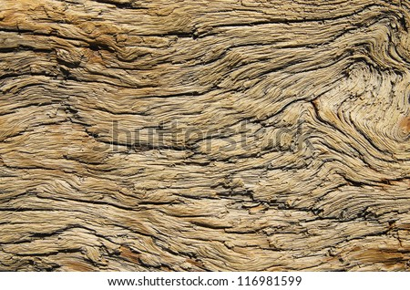 weathered and contorted natural old pine wood - stock photo