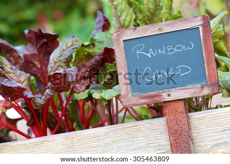Weathered chalk board sign identifying the Rainbow Chard variety of vegetable in a small garden. - stock photo