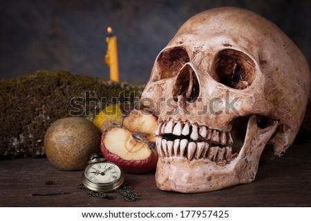 Weathered human skull, Still life - stock photo