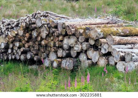 Weathered Pine log pile - stock photo