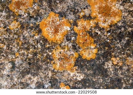 Weathered stone with yellow fungus. Abstract background.