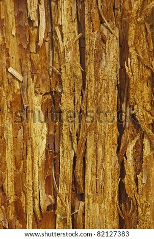 Weathered touchwood background with bough and cracks - stock photo